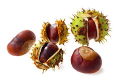 Several ripe chestnuts on a white background. stock photo