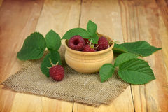 Several ripe raspberries with leaves. Close-up. Autumn. Summer. Royalty Free Stock Photo