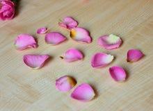 Several rose pink petals royalty free stock photography