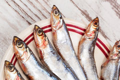 Several sardines on plate, top view. Stock Photos