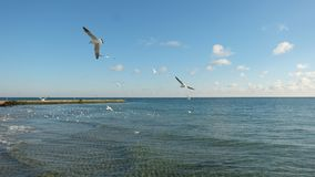 Several seagulls mowing over a calm sea, on the background of a blue sky with clouds. royalty free stock images
