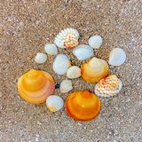 Several seashells of different shapes in the sand on the sea coast royalty free stock photo