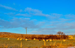 Several sheep grazing on a farm at sunset Stock Images