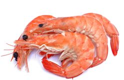 Several shrimp Royalty Free Stock Image