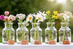 Several small glass bottles with bouquets of medicinal plants - homeopathy or herbal medicine concept stock photo