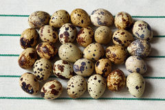 Several small quail eggs lie on a towel Stock Images