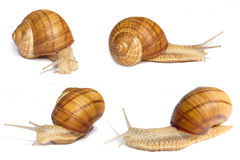 Several Snails. Different Angle Stock Photos