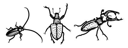 Several species of beetles Stock Image