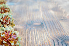 Several spruce cones on the wooden background. Royalty Free Stock Photos
