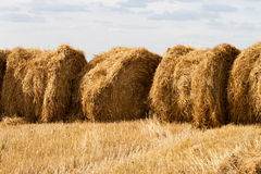 Several stacks of hay Royalty Free Stock Image