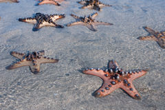 Several Starfish is lying on Sand with blue water Royalty Free Stock Photo