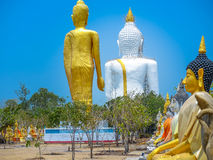 Several statues of Buddha posture. Big white Buddha statue in front of Royalty Free Stock Photos