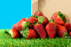 Several strawberries on green grass Royalty Free Stock Photo