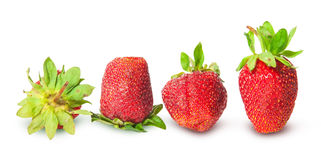 Several strawberries in a row Stock Images