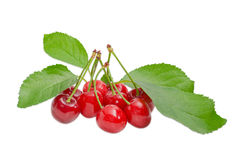 Several sweet cherries and branch with leaves Royalty Free Stock Images
