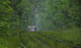 Several thin grass blades on the rails in the forest. Royalty Free Stock Image
