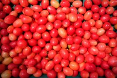 Several tomatoes are sold Stock Photo