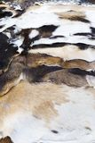 Several treated goat skins. Passes its sale in a market stock photo