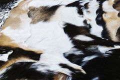 Several treated goat skins. Passes its sale in a market royalty free stock image
