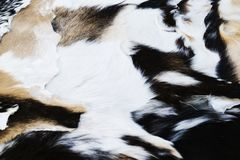 Several treated goat skins. Passes its sale in a market stock photos