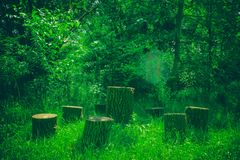Several tree stumps in the forest. Handmade furniture.  royalty free stock photography