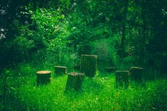 Several tree stumps in the garden. Handmade furniture on green grass background.  royalty free stock photos
