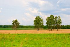 Several trees in the field. royalty free stock photos