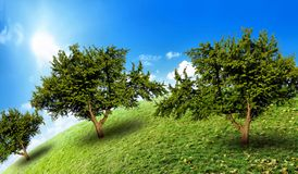 Several trees in a green field Royalty Free Stock Image