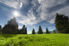 Several trees with mountain meadow clouds and sun Stock Photo