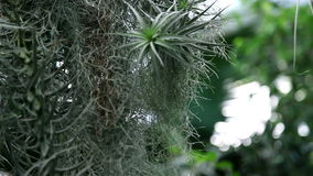 Several tropical plants growing together in botanic garden stock video footage