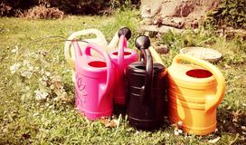 Several watering cans in various colors stands in a green garden a sunny summer day. royalty free stock photo