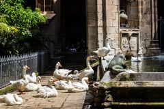 Several white gooses near a lake inside the castle yard Royalty Free Stock Photos