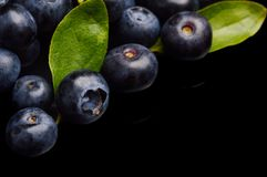 Several whole blueberries with leaves  on black corner Royalty Free Stock Images