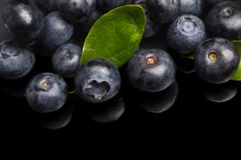 Several whole blueberries with leaves isolated on black corner Stock Image