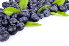 Several whole blueberries with leaves isolated on white corner Stock Photography