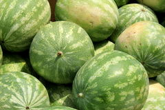 Several whole watermelon on display at farmers market. Arrangement of large watermelon ready for shoppers to choose from at the local farmers market Royalty Free Stock Photos