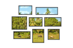 Several windows on a white wall with jungle landsc Stock Photos