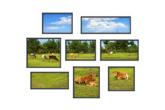 Several windows on a white wall with rural landscape Royalty Free Stock Photos