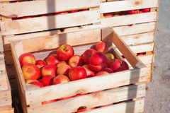 Several wooden boxes with red apples Stock Photography