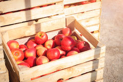 Several wooden boxes with red apples Stock Photos