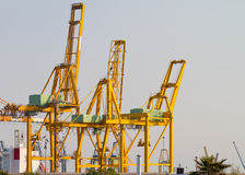 Several yellow big cranes Royalty Free Stock Photography