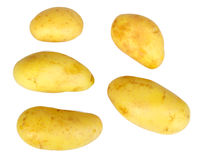 Several yellow raw potatos Stock Photos