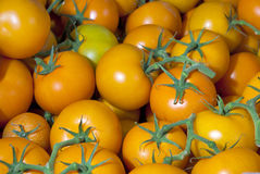Several Yellow tomatoes with green stems Royalty Free Stock Images