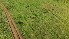 Several young beautiful horses graze in the evening on a meadow at grass field abstract up look plan