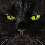 Severe black cat looking to you with bright yellow eyes Stock Image