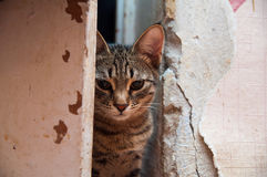 A severe cat is in a doorway. Royalty Free Stock Photos