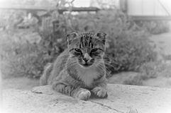 severe kitty looks royalty free stock images