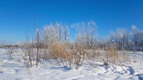 Severe Russian winter snowy landscape, frosty day. Winter snowy landscape outside the city on a Sunny frosty day. Field and trees are covered with snow. Rural stock video