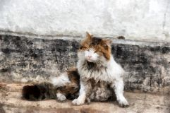 Severe Siberian harsh rural cat examines the  territory of domin Royalty Free Stock Images