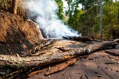 A severe wildfire burnt the trees in the forest until they collapsed and blocked the country road. stock photo